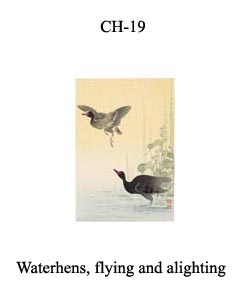 CH-19 Waterhens, Flyind And Alighting